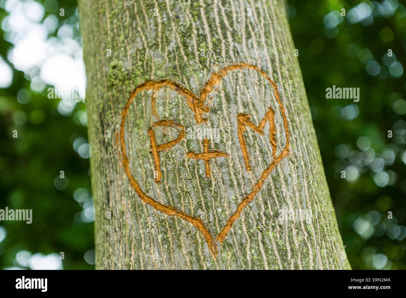 Lovers Initials Carved In Tree Stock Photos Lovers Initials Carved