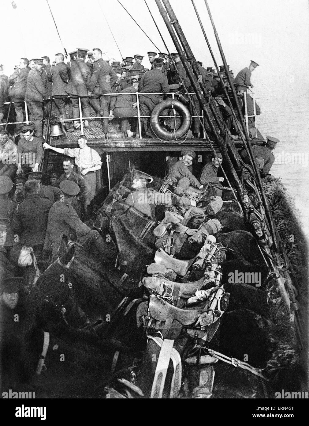 British cavalry and horses on board ship on their way to France, August 1914.  The British Expeditionary Force were - Stock Image