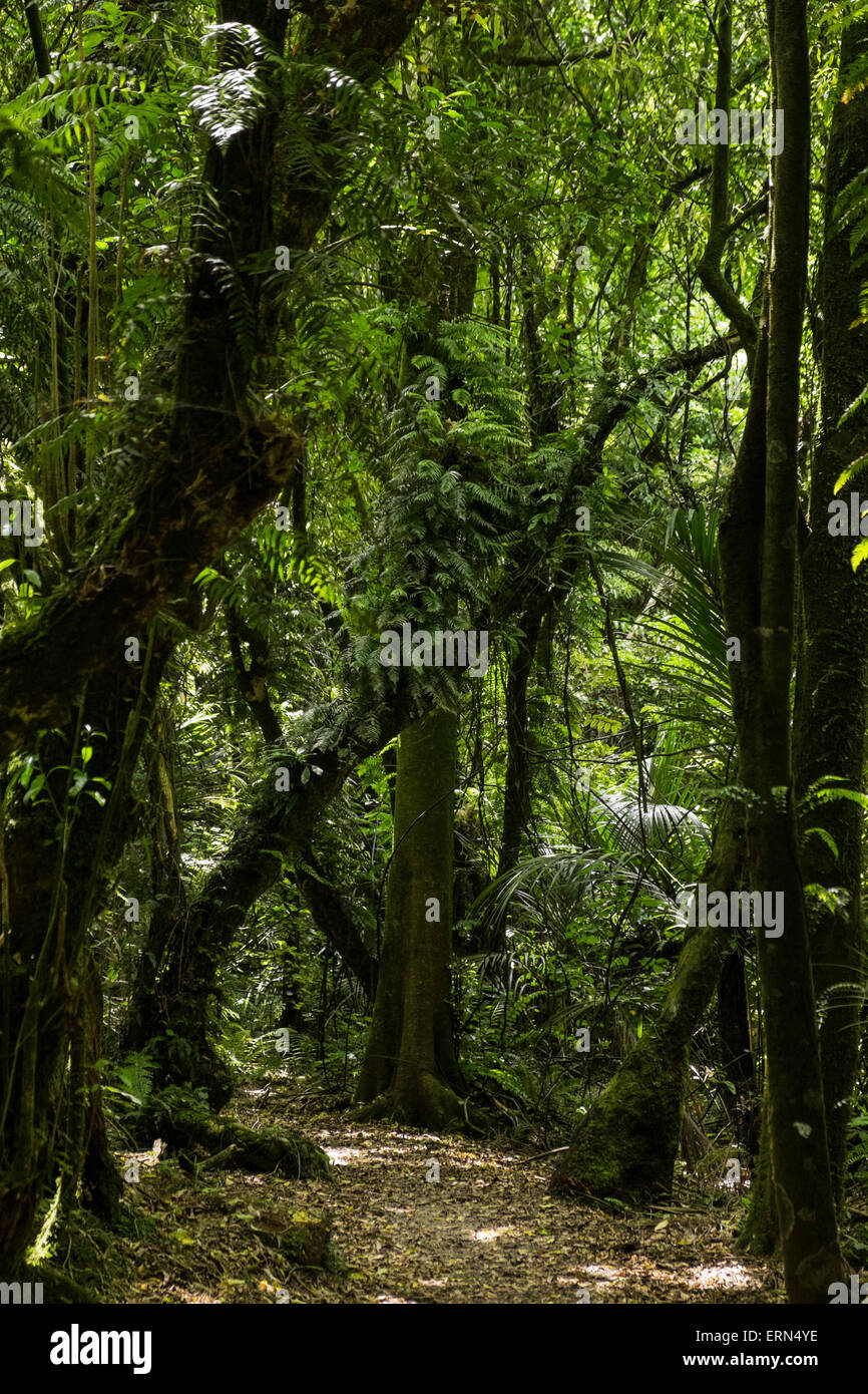 Track through the bush in the Manawatu Gorge, Te Apiti, New Zealand. - Stock Image