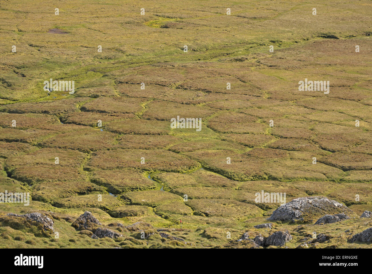 Pattern created in ground due to permafrost, beneath cliff of Alkhonet, above Trygghamna, Isfjorden, Spitzbergen, - Stock Image