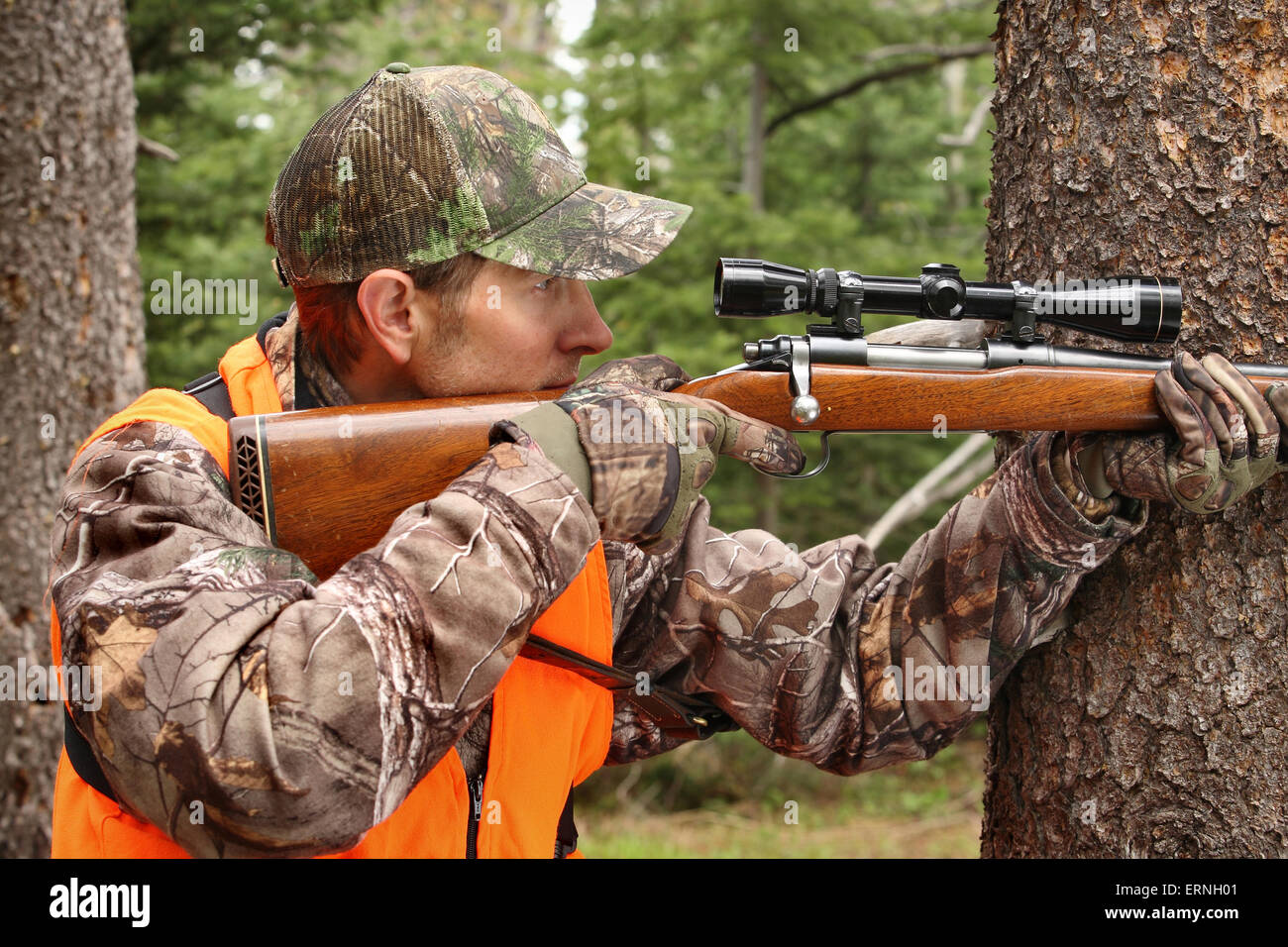 adult hunter aiming deer rifle in forest - Stock Image