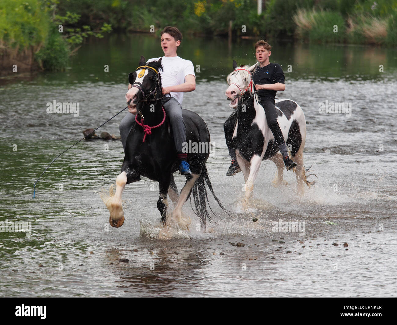 Appleby-in-Westmorland, Cumbria, England - June 05, 2015: Horses being washed in the river Eden prior to trading - Stock Image