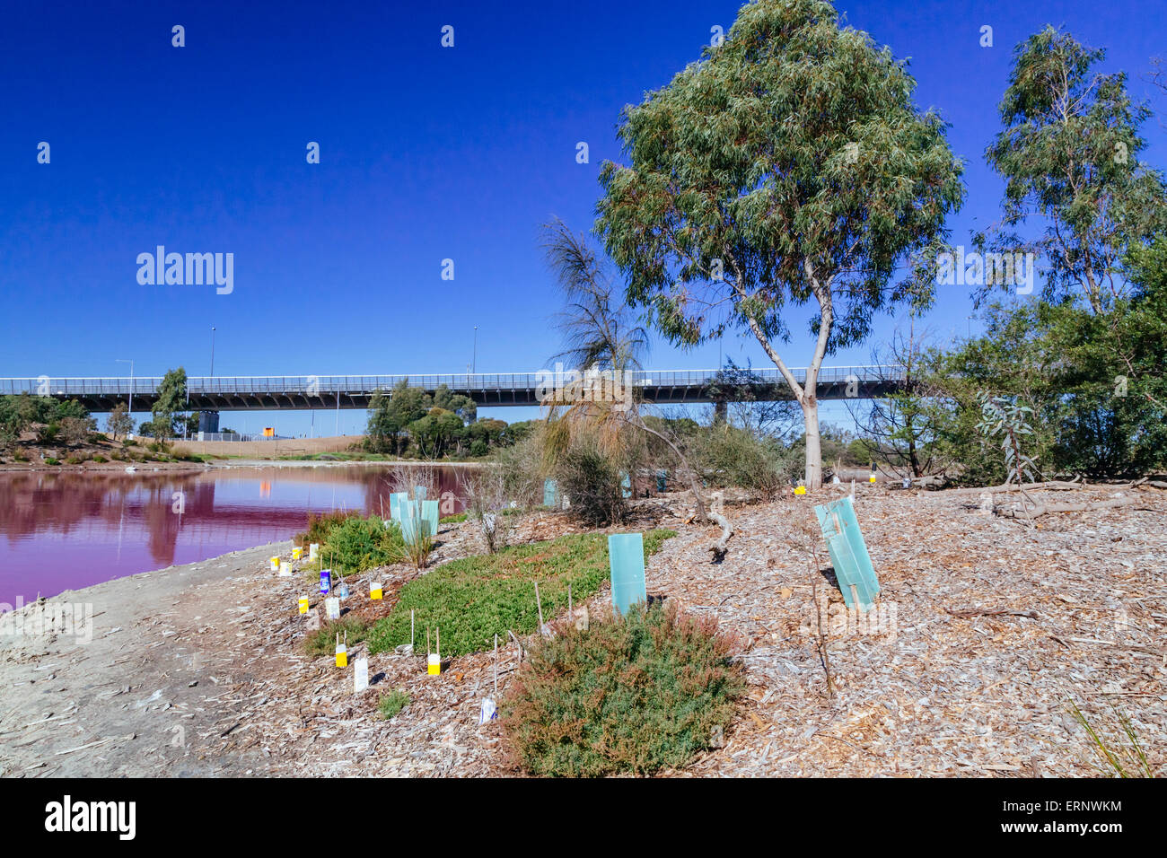 Pink Lake, Westgate Park, Port Melbourne, Melbourne, Victoria, Australia - Stock Image