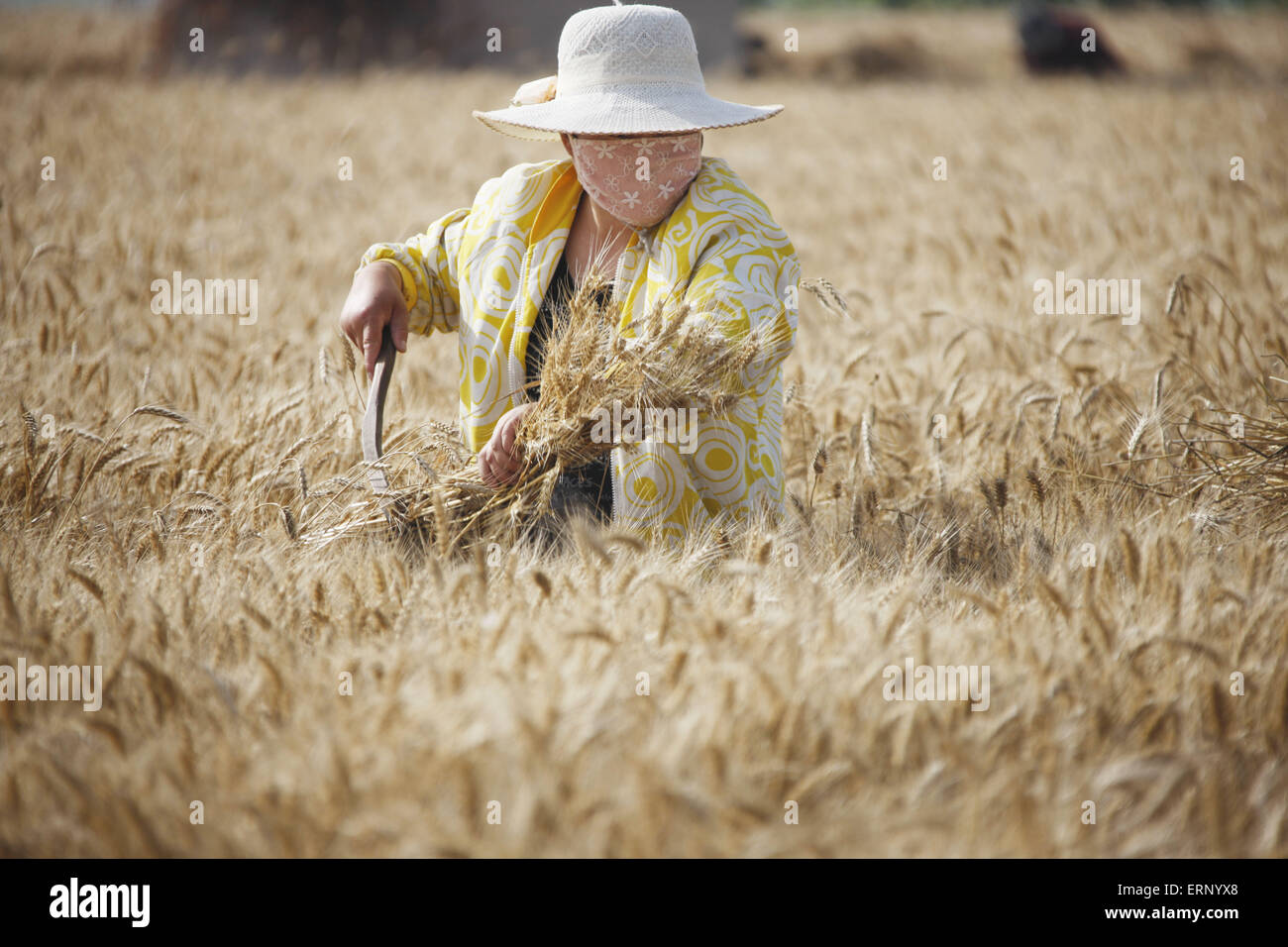 Farmer labors in the days of wheat harvest in Huaibei, Anhui province, China 6th June 2015. - Stock Image