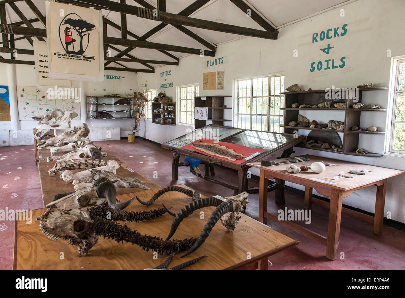 Koiyaki Guiding School Maasai Mara National Reserve in southern Kenya Africa - Stock Image