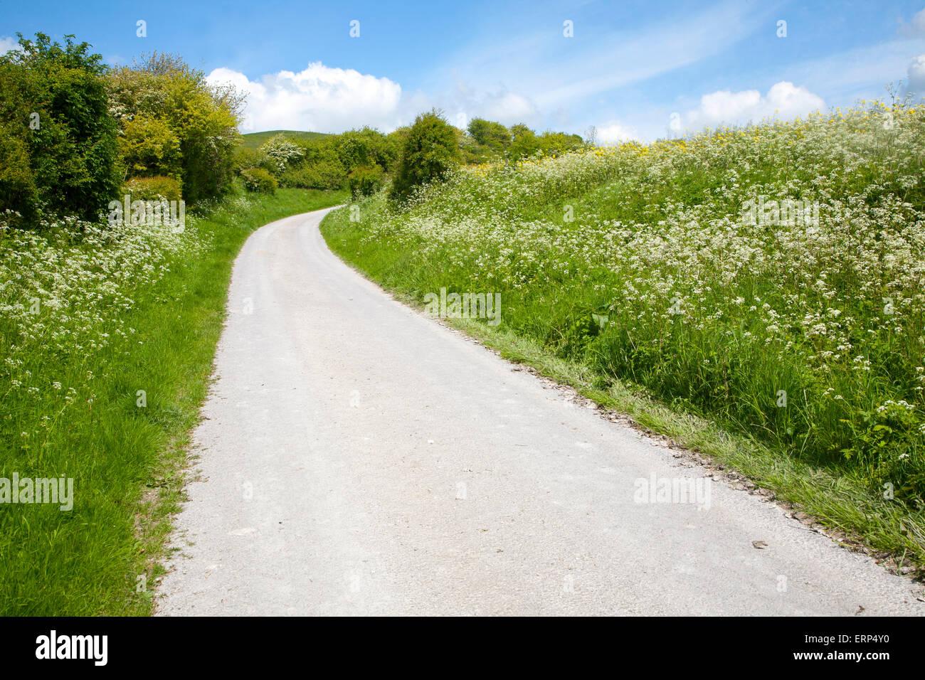 Road climbing chalk downland Allington Down, Wiltshire, England - Stock Image