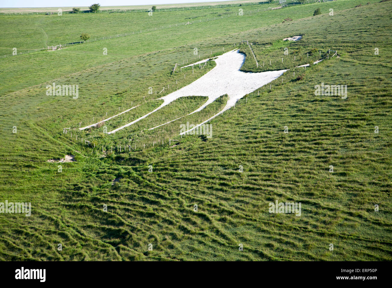 White horse figure carved in chalk scarp slope at Alton Barnes, Wiltshire, England, UK Stock Photo