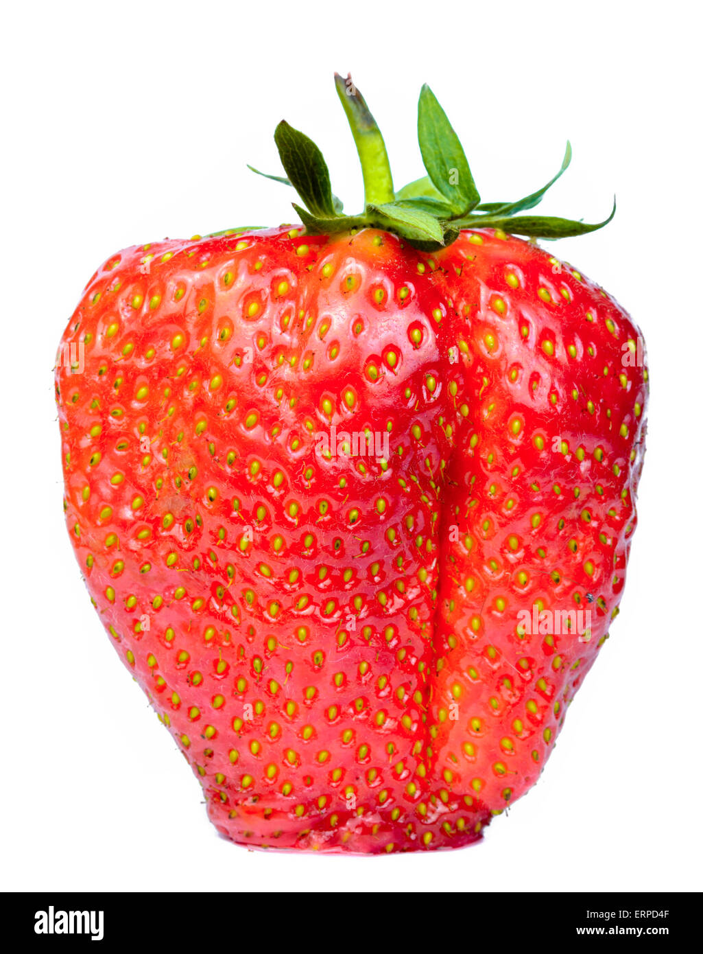 Large ripe English strawberry on a white background. - Stock Image