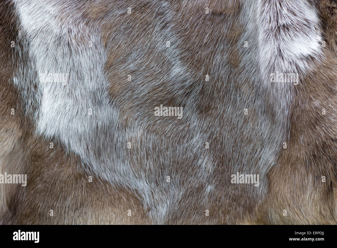 Fur and Leather Animal Hide on show at a festival - Stock Image