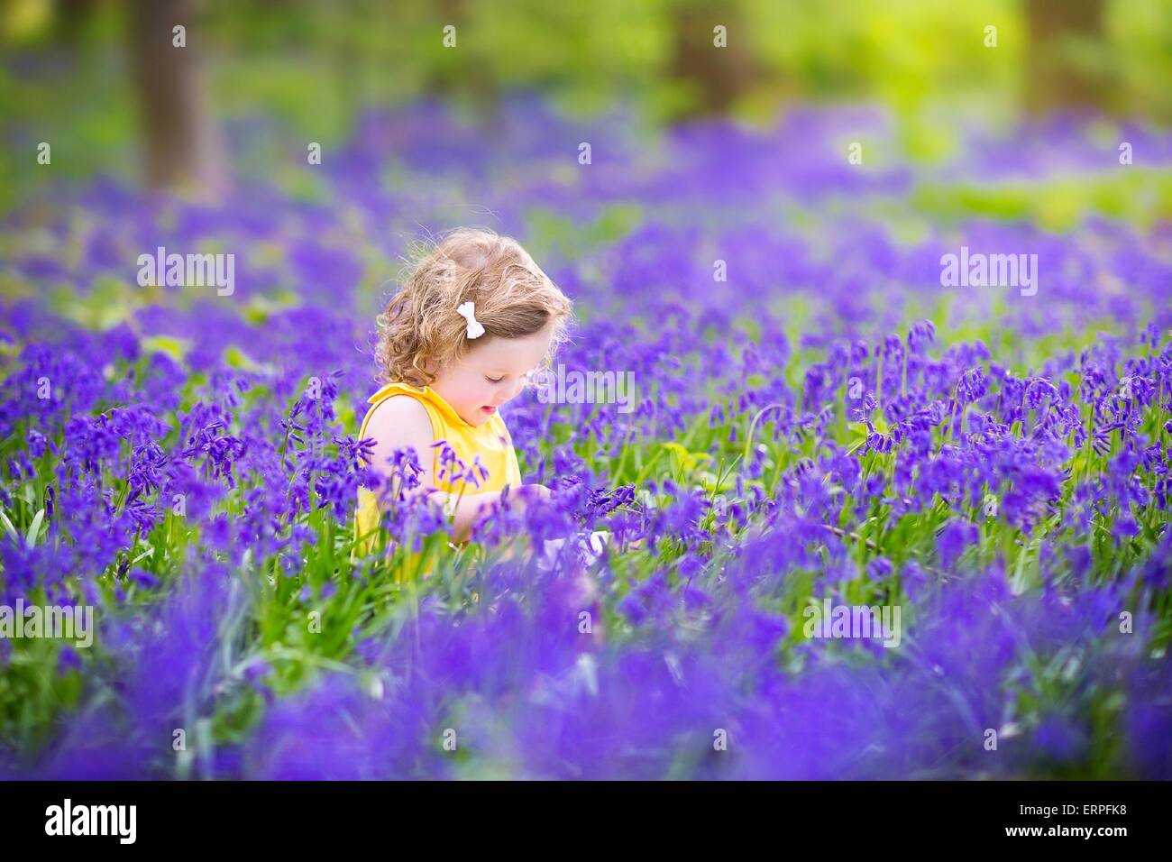 Adorable toddler girl with curly hair wearing a yellow dress playing adorable toddler girl with curly hair wearing a yellow dress playing with purple bluebell flowers in a sunny spring forest mightylinksfo