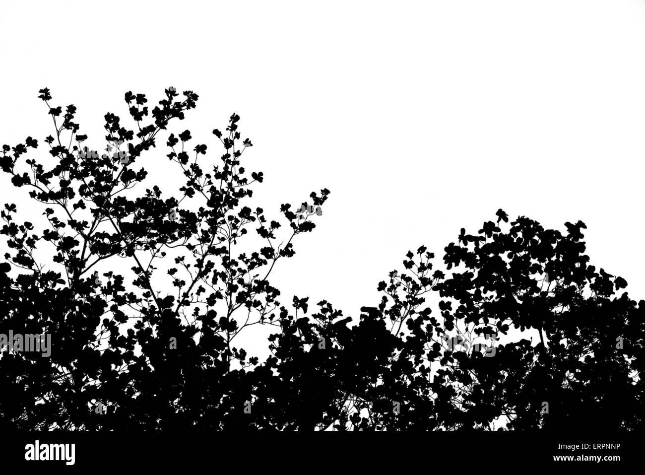 Black And White Cutout Of Cherry Blossoms
