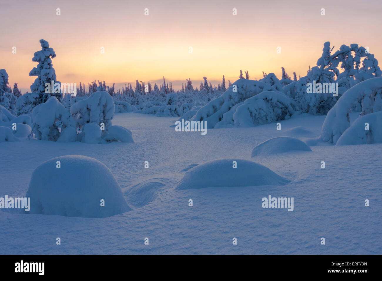 Winter landscape with snowy trees and clear blue sky in sunset in Gällivare, Swedish lapland, Sweden - Stock Image