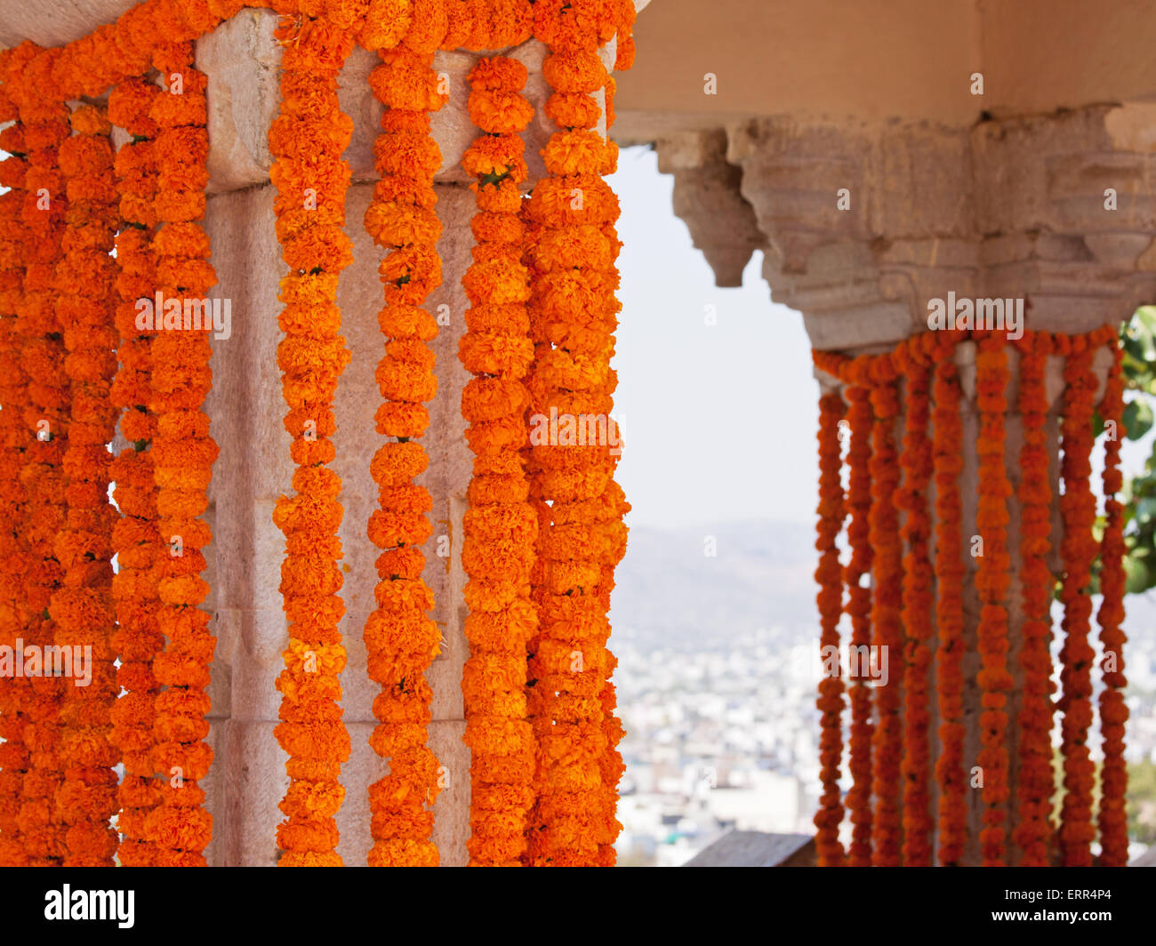 Marigold Flowers India Stock Photos Marigold Flowers India Stock