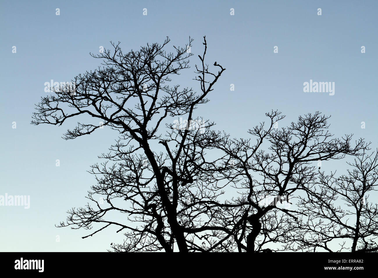 Tree top - Stock Image