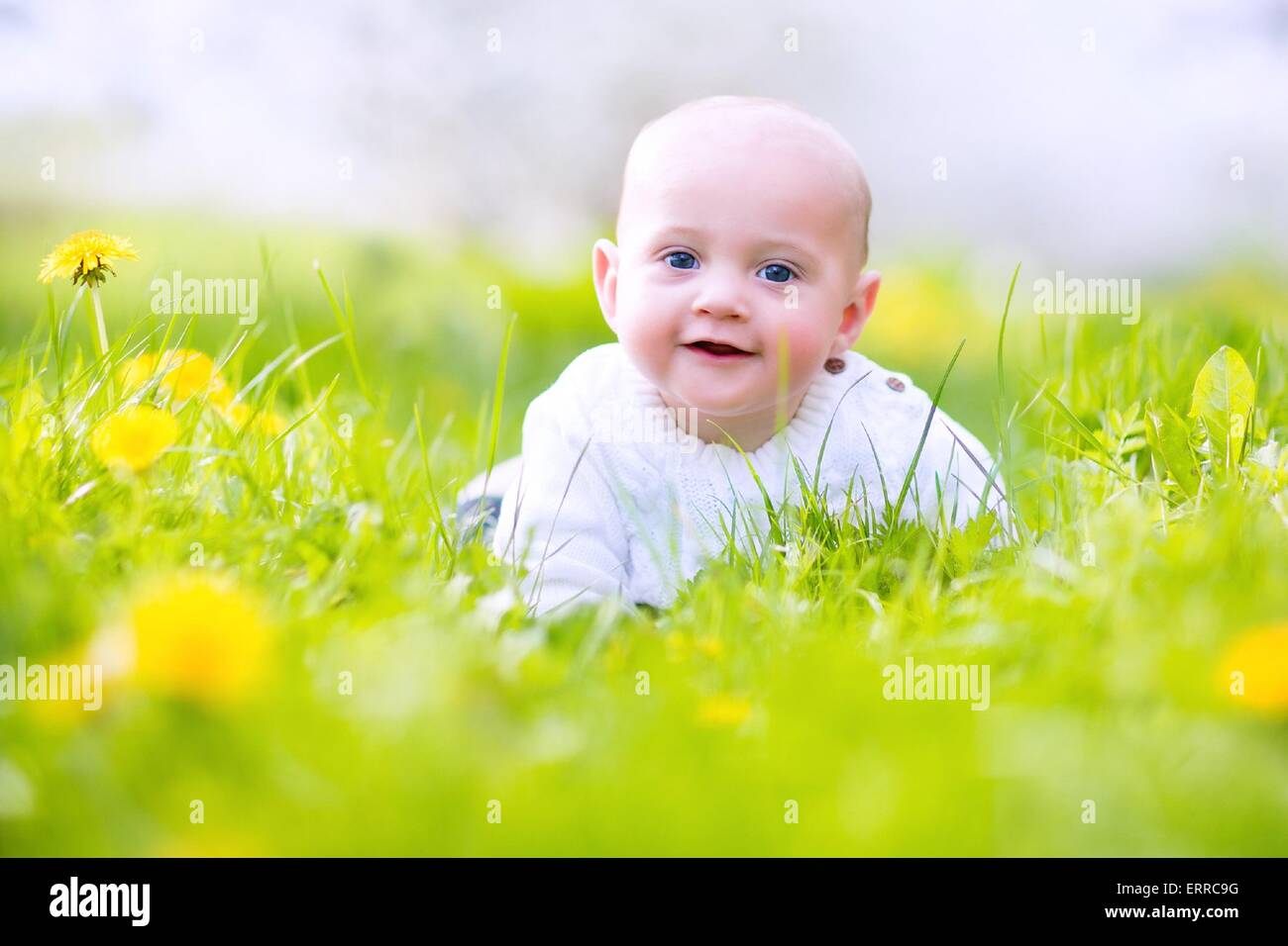 Adorable little happy smiling baby boy playing in a blooming apple garden between beautiful trees with white flowers - Stock Image