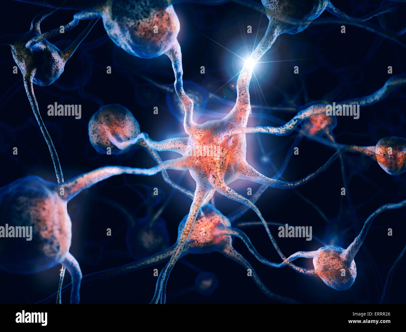 Network of neurons and neural connections, Brain cells, scientific conceptual 3D illustration - Stock Image