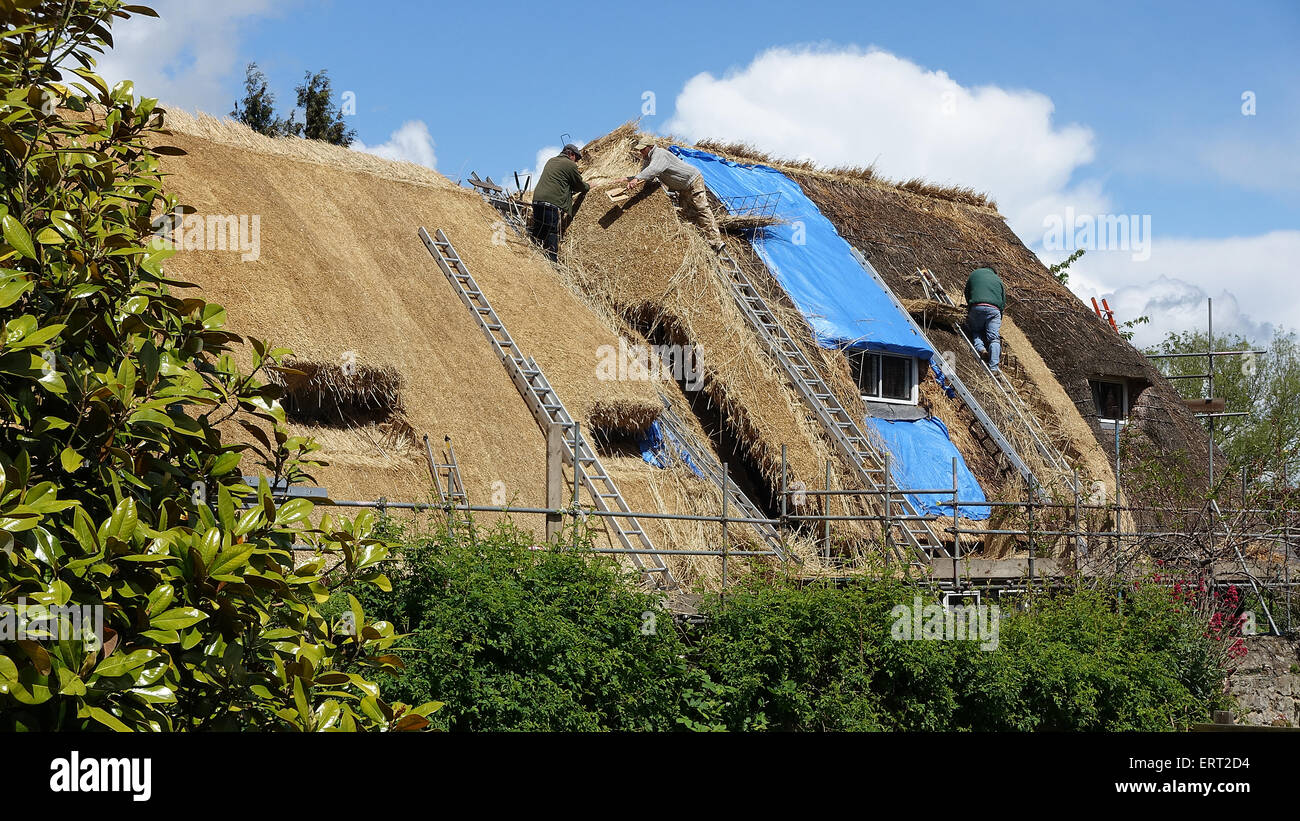 Thatching in Wytham, Oxfordshire -1 - Stock Image