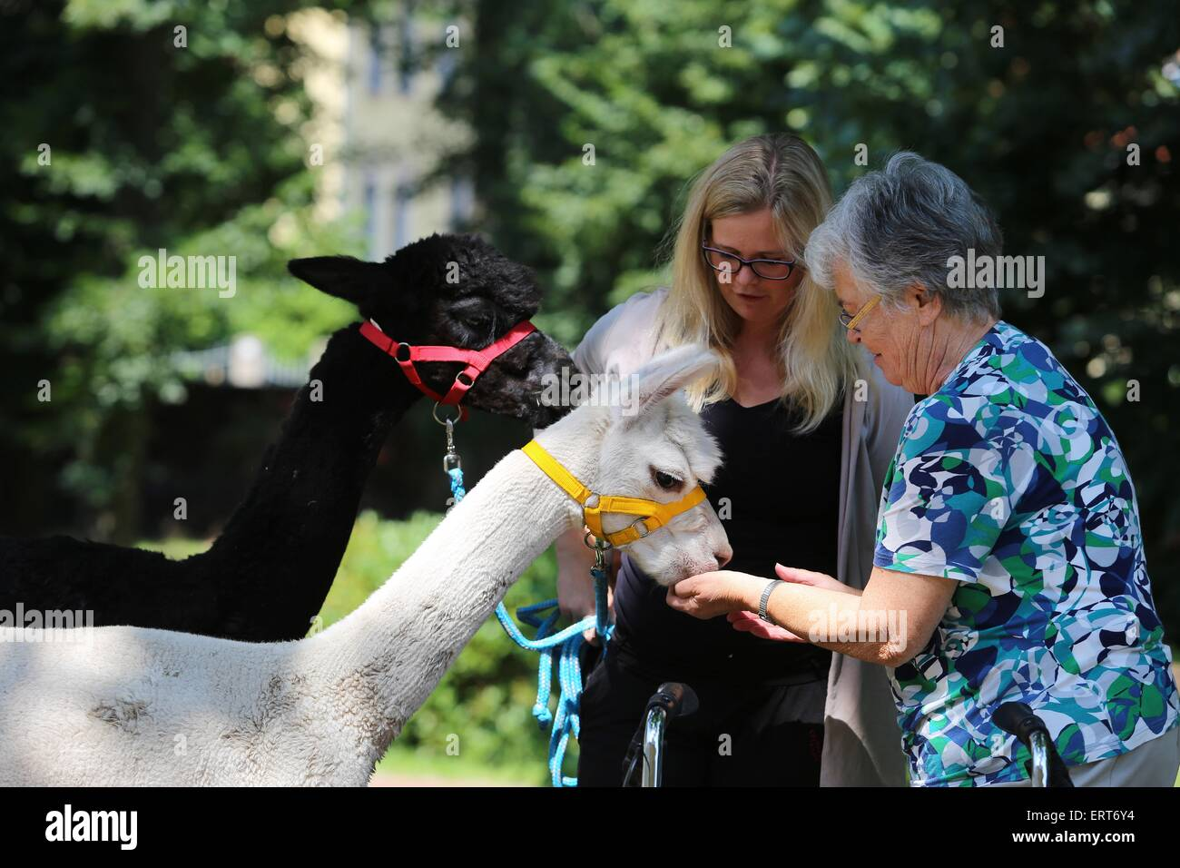 animal-assisted therapy - Stock Image