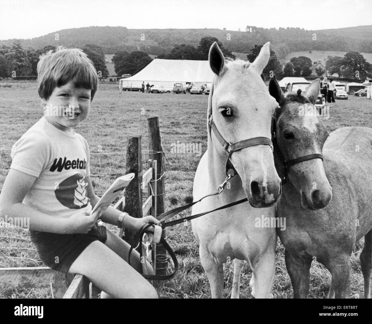Osmotherly Agricultural Show. Ryan Champion, 7 years old, with his grandad's Welsh riding ponies. 7th August - Stock Image