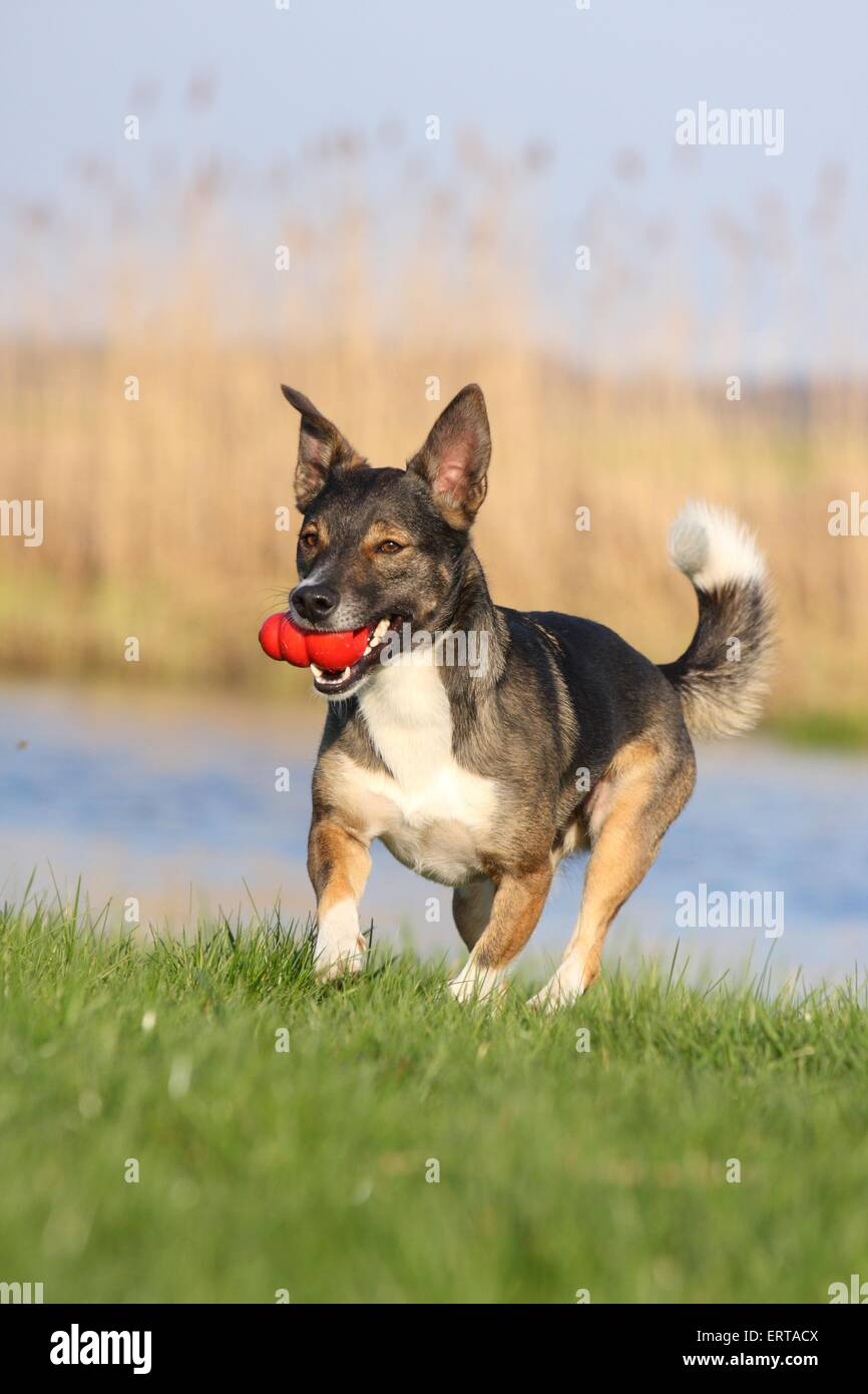 playing dog - Stock Image