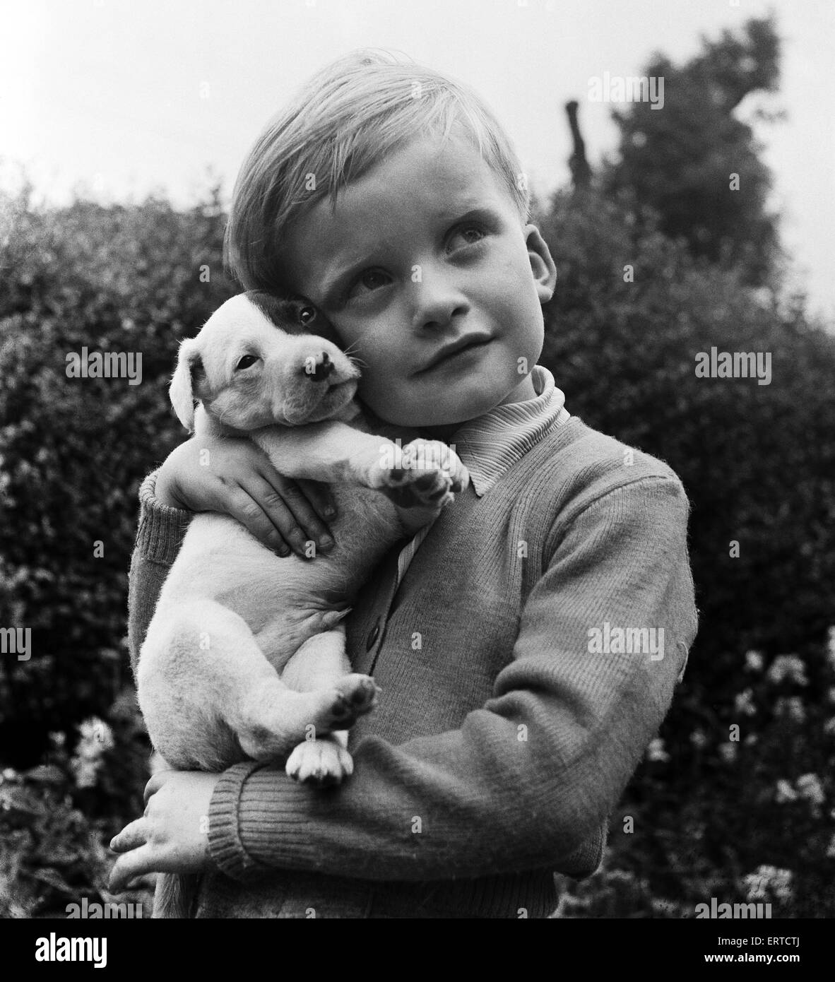 Four-year old Ryan Widdowson of Meanwood, Leeds, holds his new puppy, Whiskey. 19th August 1953. - Stock Image