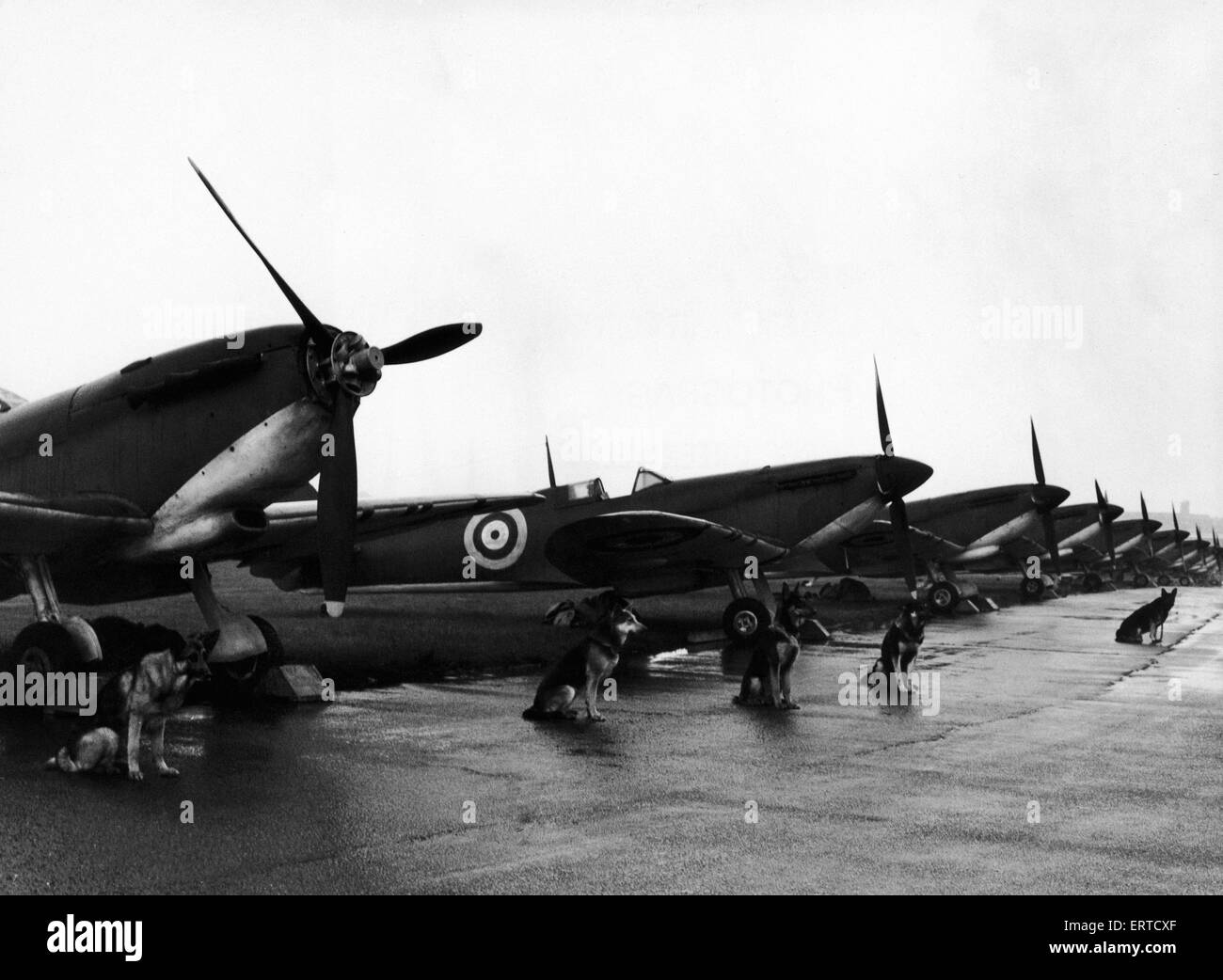 Twelve Spitfire fighter planes lined up on the air strip at North Weald, awaiting the call before filming for a - Stock Image