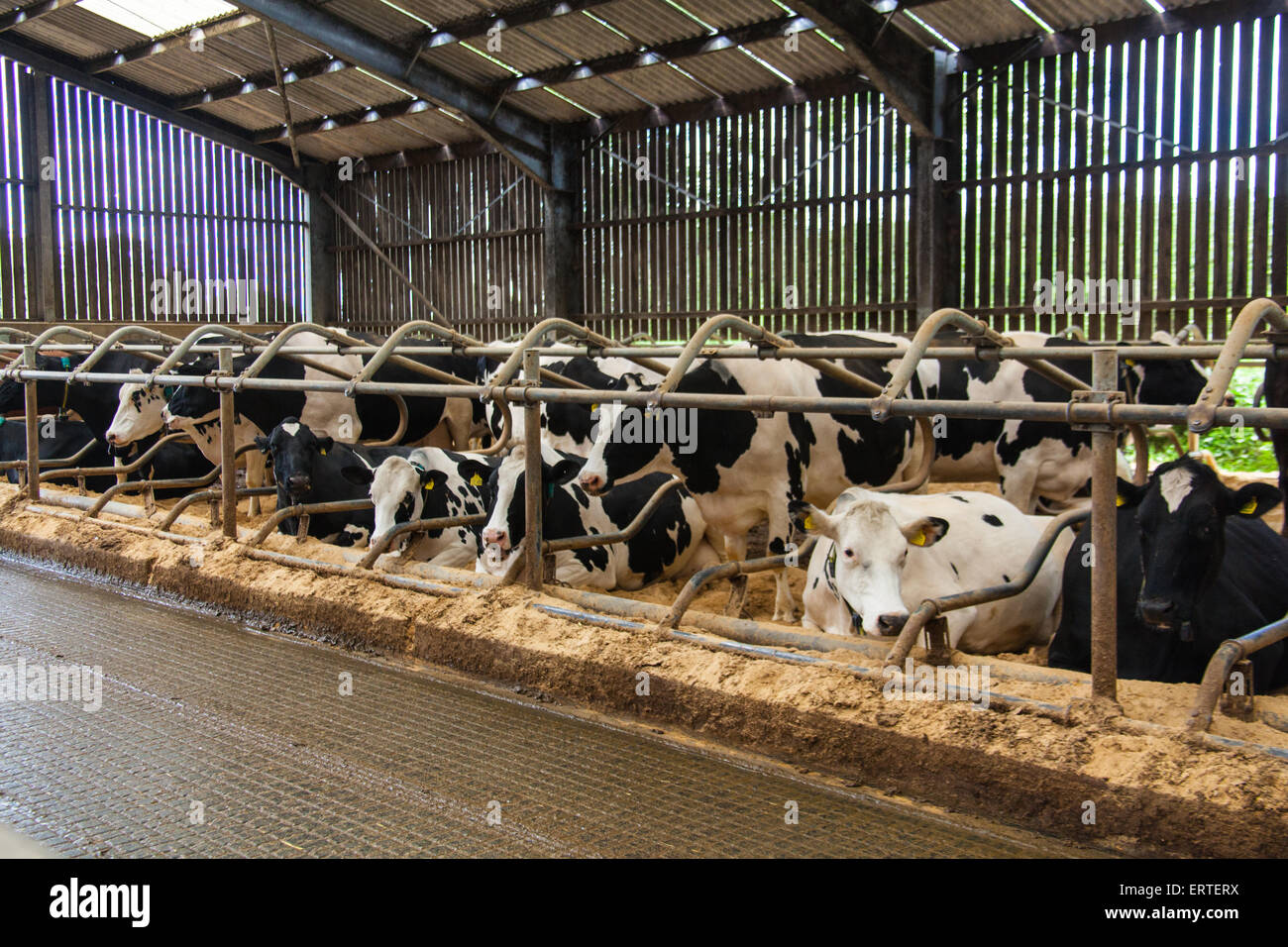 advantages of management intensive grazing dairy farms and the imitation of csa Mississippi state university extension has a publication on the economic benefits of rotational grazing southwest farm press has an article about improved efficiency from rotational grazing case's agworld has links to information about rotational grazing (and much more) grazing studies: what we've learned, was published in april 1999 by jl holechek, h gomez, f molinar, and d galt it offers a synopsis many studies on grazing.