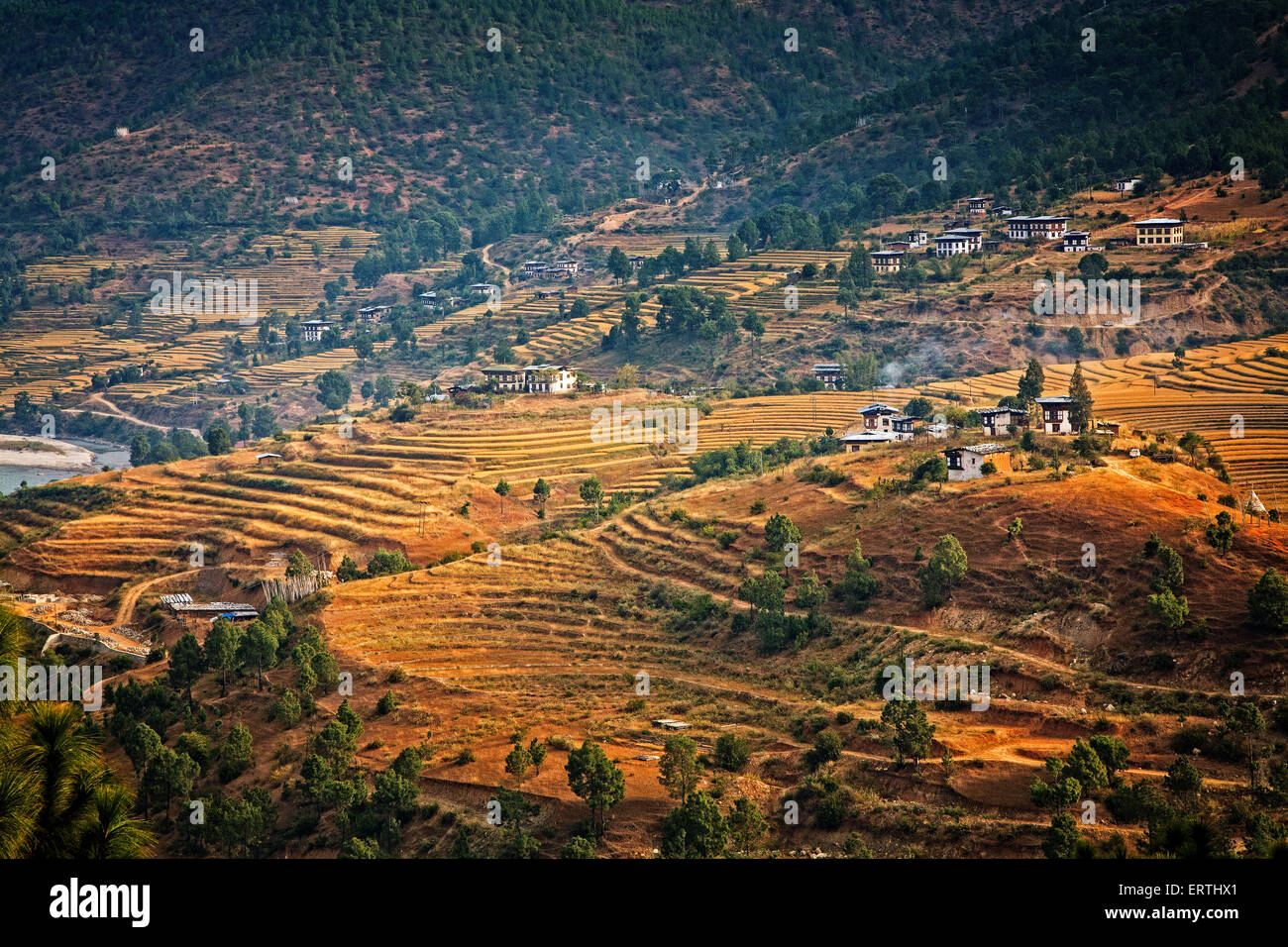 Farms and rice fields punctuate the Punakha Valley.  Bhutan. - Stock Image