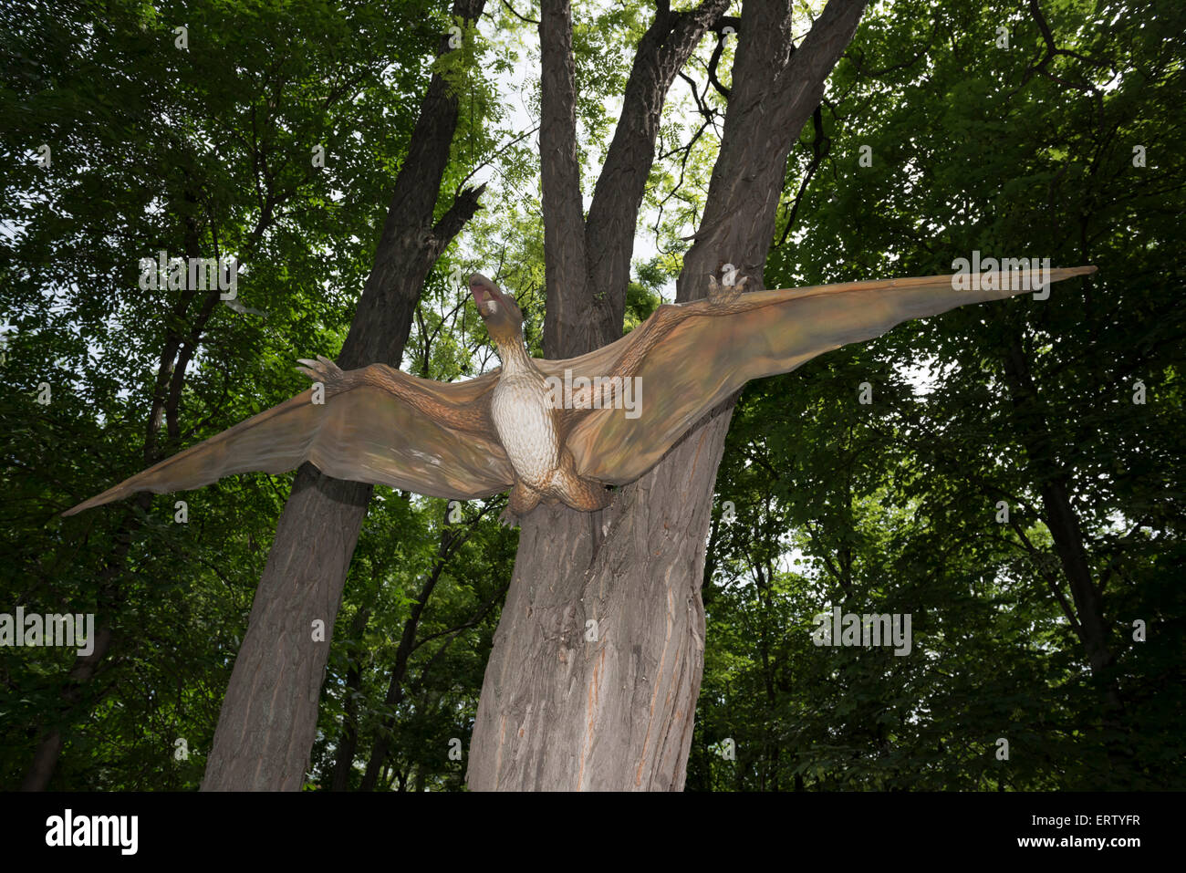Pterodactylus PERIOD: Jurassic and Cretaceous periods Stock Photo