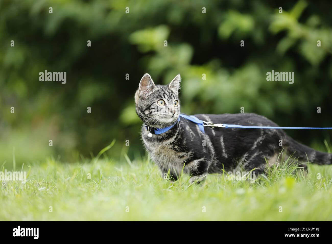 young cat - Stock Image