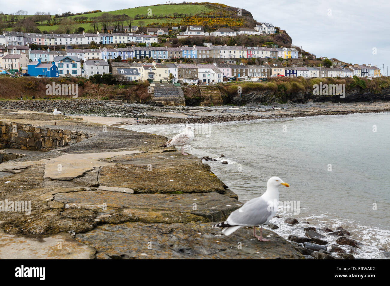 New Quay, Ceredigion, Wales - Stock Image