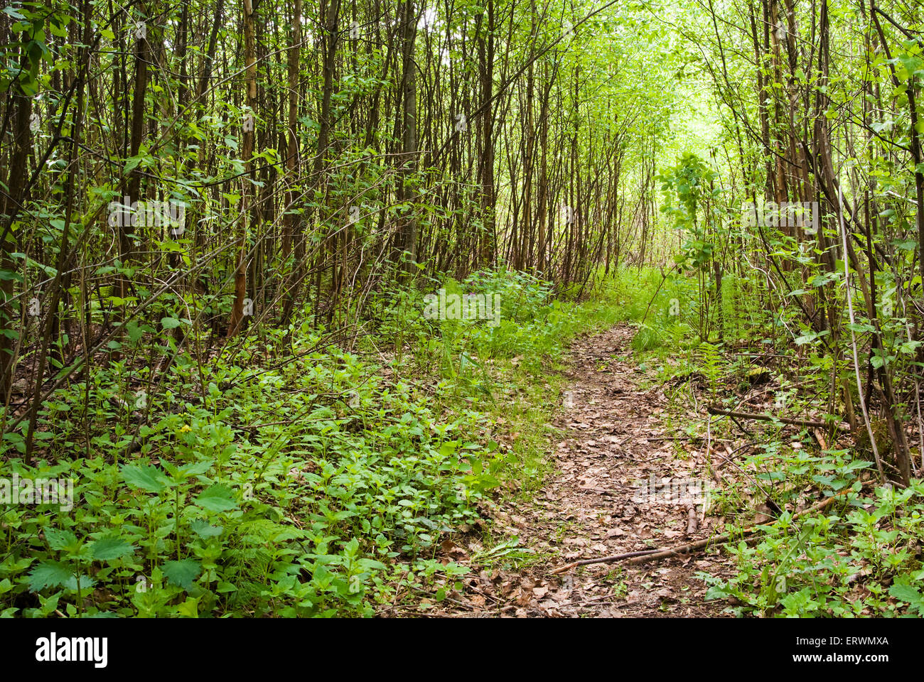 Pathway Through Dense Forest In Stock Photos & Pathway