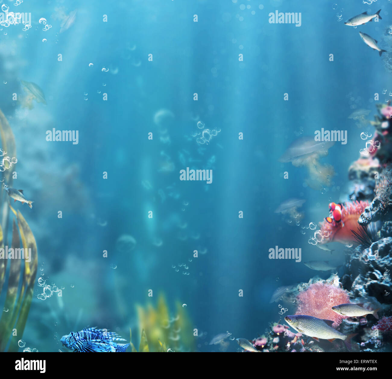 Marine. Sea Life. Aquarium with Fishes and Corals - Stock Image