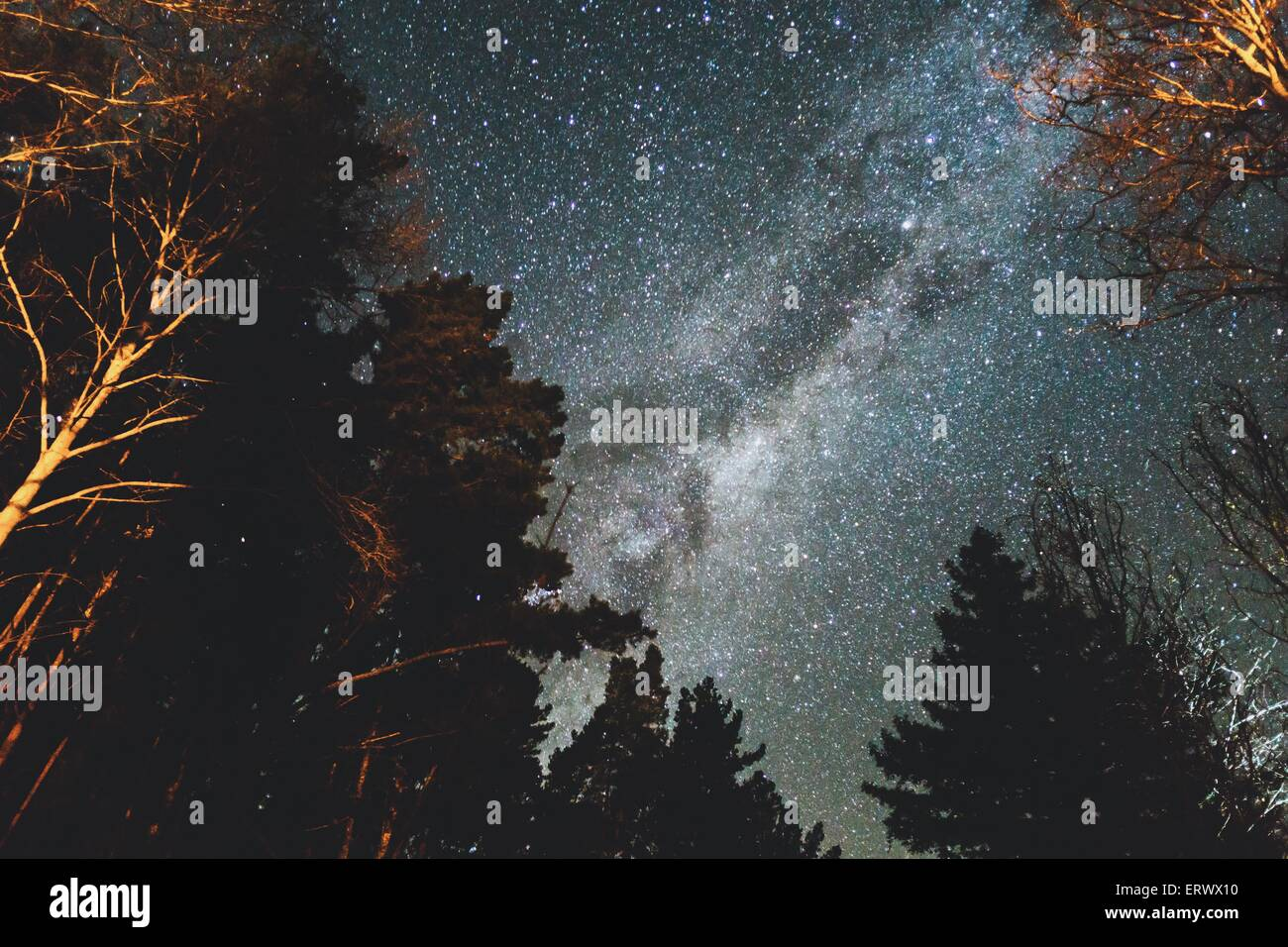 Beautiful clear night showing the milky way above the trees from the Mt Franklin camp site near Daylesford. - Stock Image