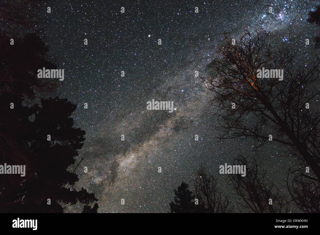 Clear skies above trees showing the milky way. - Stock Image