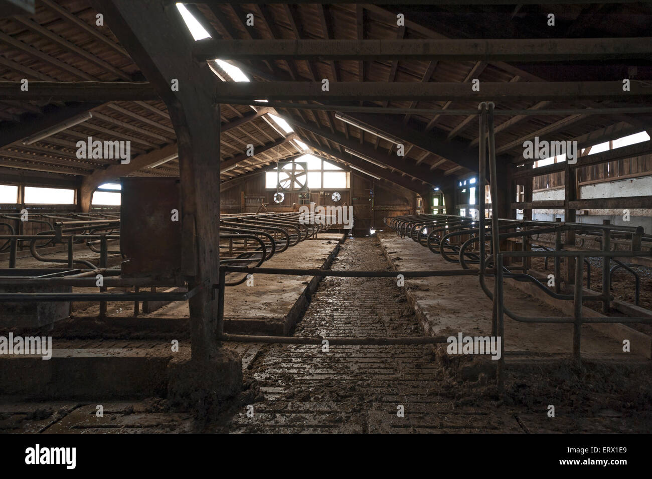 Empty, outdated exercise pen for dairy cows, Bavaria, Germany - Stock Image