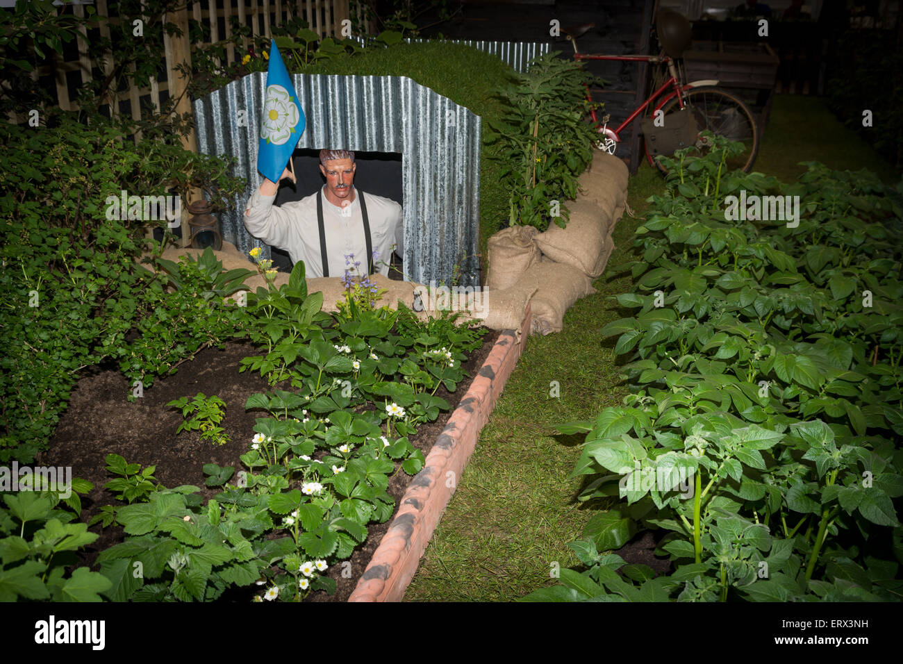 An Anderson shelter recreation of a wartime vegetable garden - Stock Image