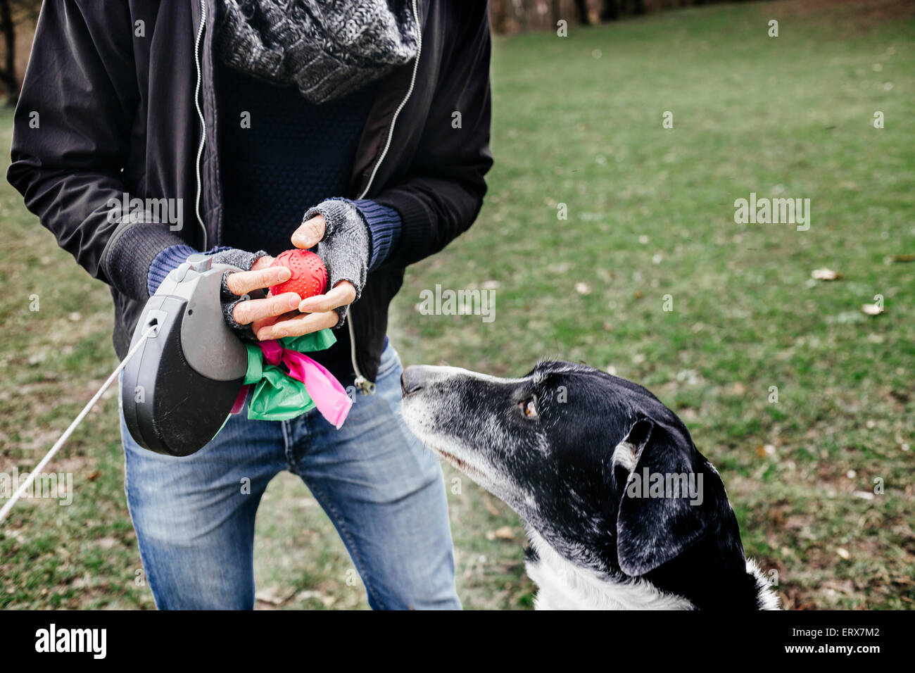 Midsection of man holding ball by mixed-breed dog at park - Stock Image
