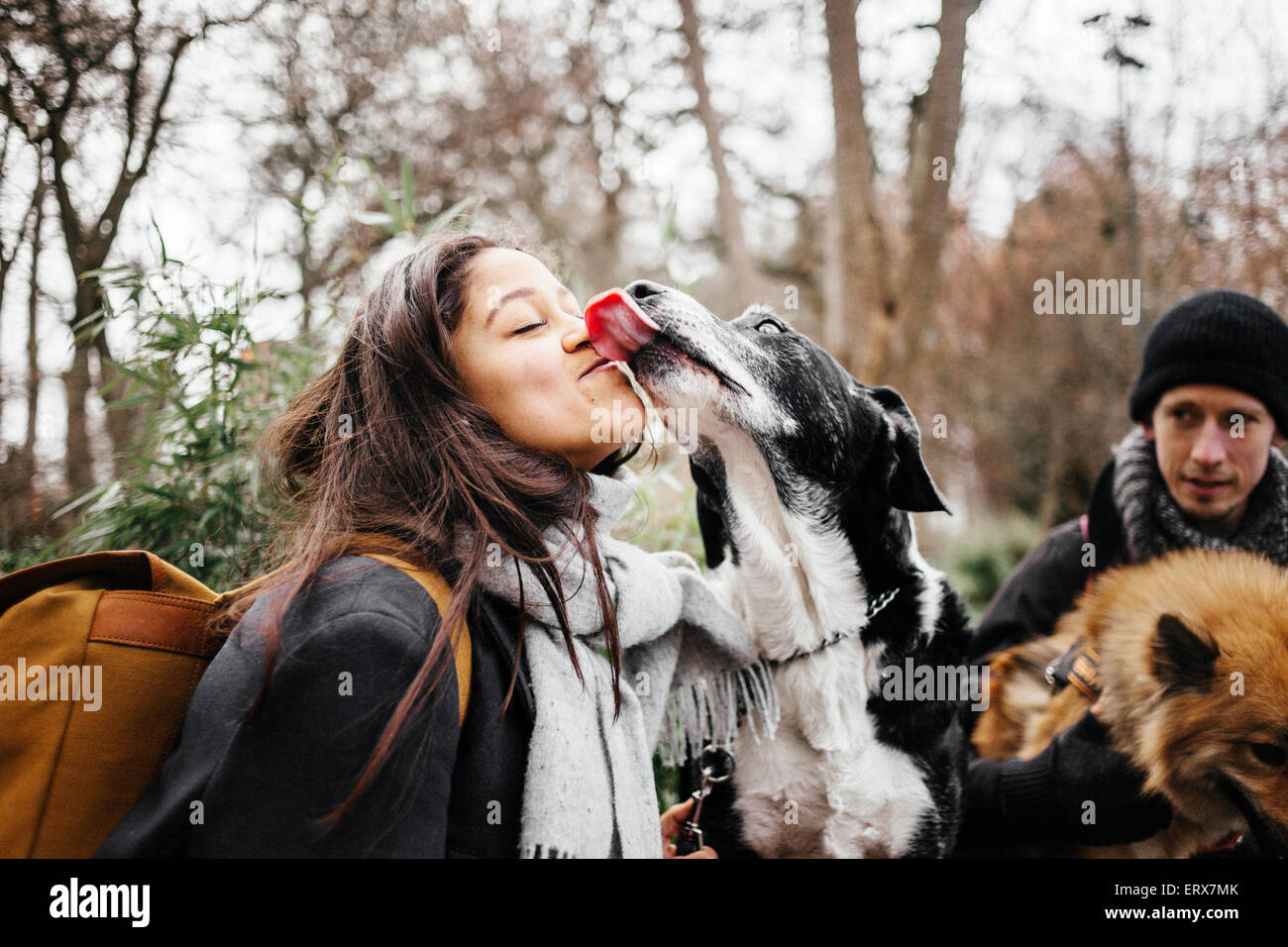 Mixed-breed dog licking woman with man and Eurasier in background at park - Stock Image
