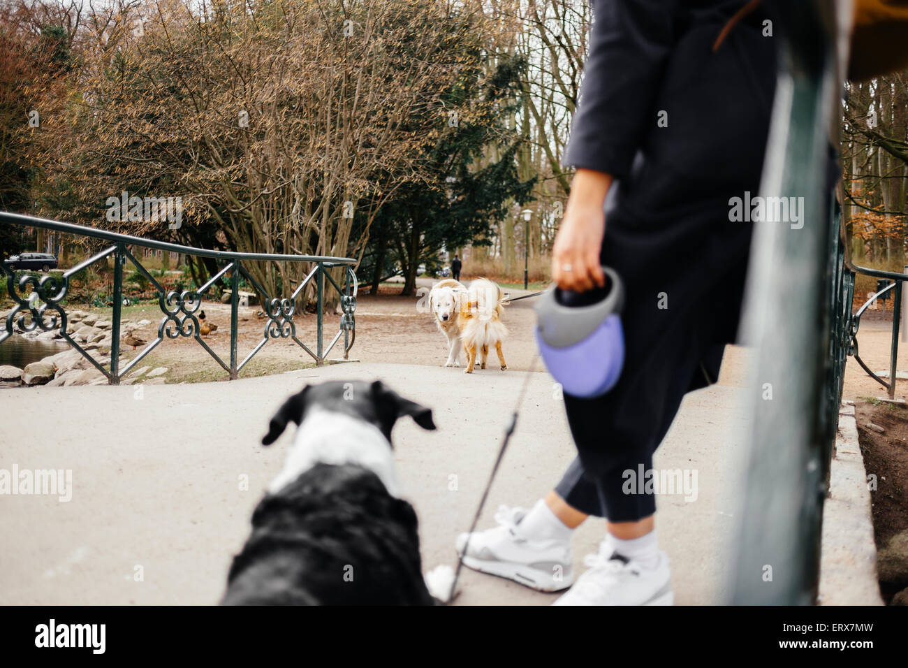 Low section of woman standing with mixed-breed dog on bridge at park - Stock Image
