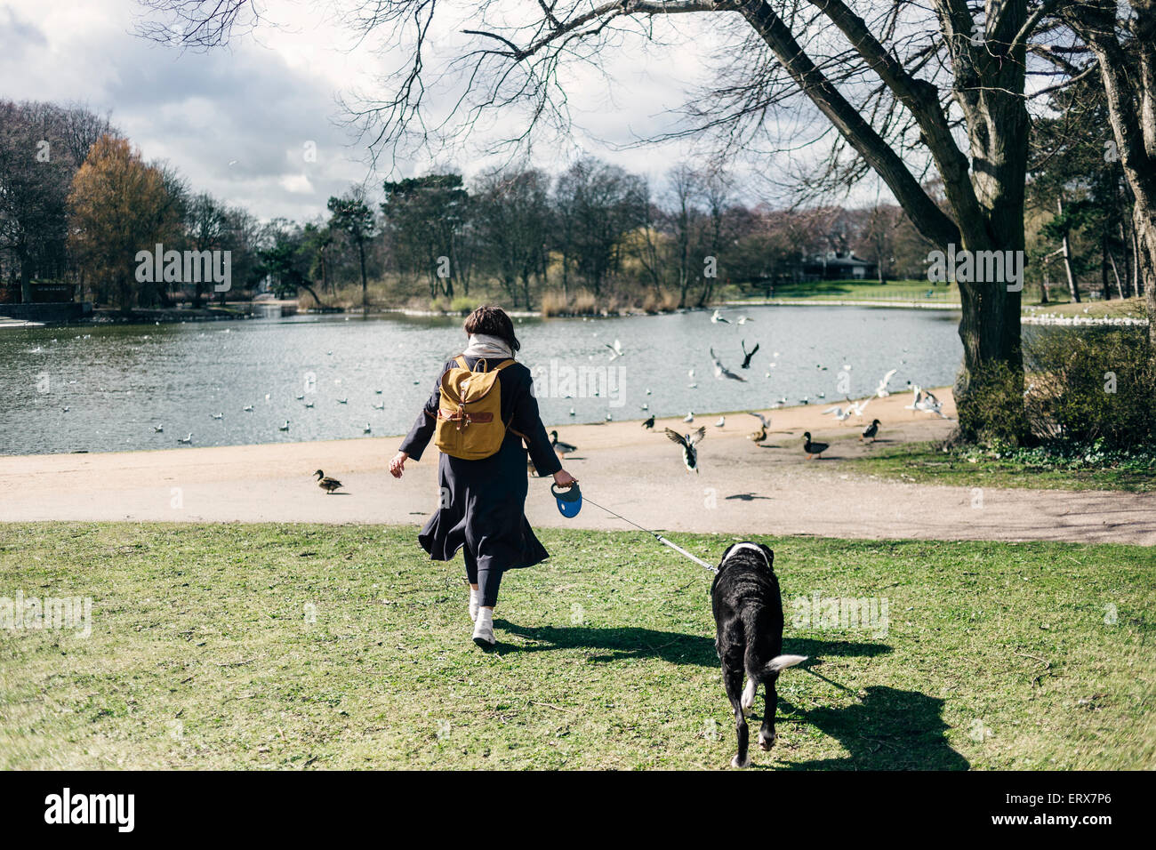 Rear view of woman walking with mixed-breed dog at park - Stock Image