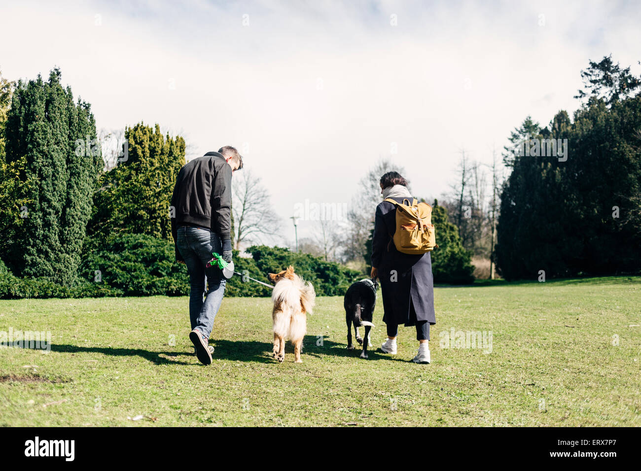 Rear view of young couple walking with dogs at park - Stock Image
