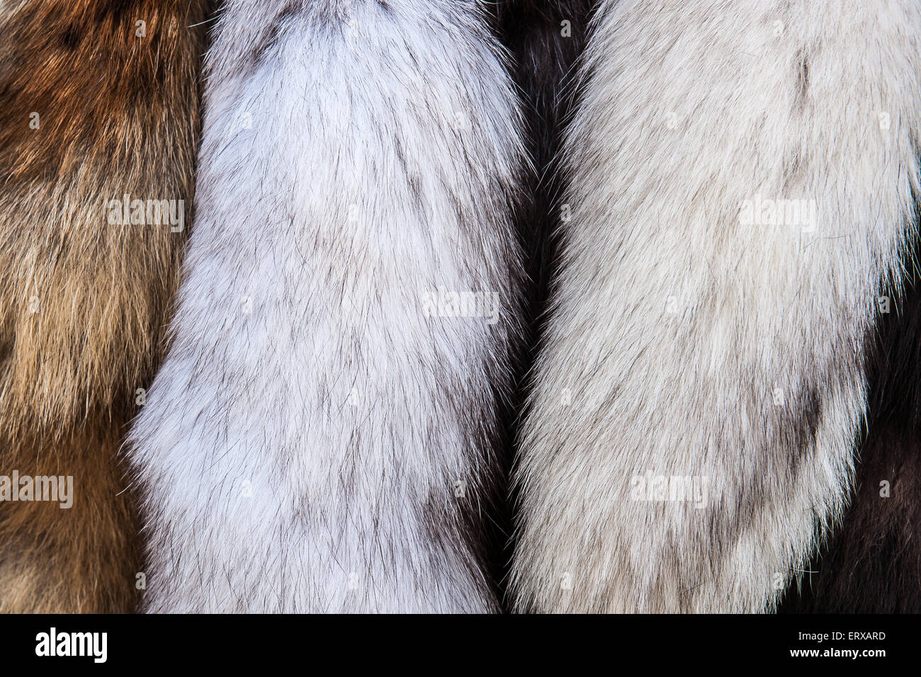 Furs on display for sale at the Roman history festival - Stock Image
