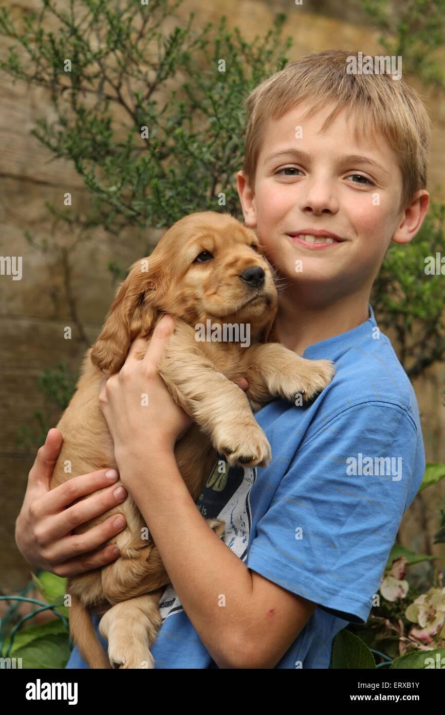 English Cocker Spaniel Puppy - Stock Image