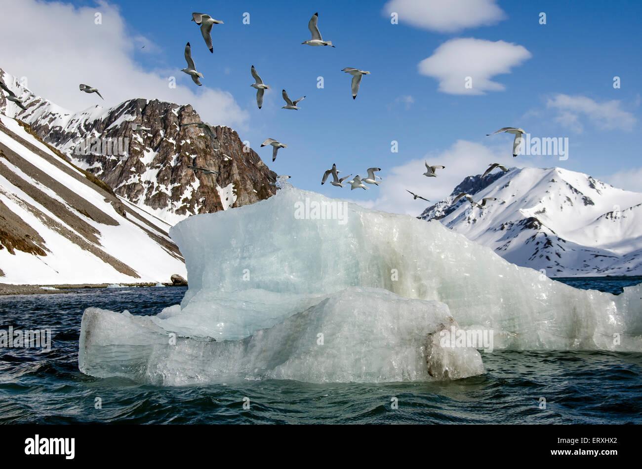 Floating ice and birds at Burgerbukta Svalbard Norway Scandinavia Arctic Circle - Stock Image