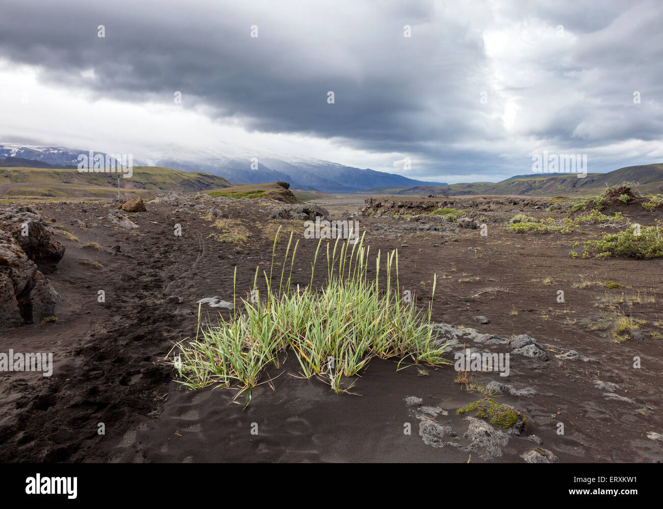 Sparse Vegetation Growing Out of Volcanic Ash With Northern Slopes of the Eyjafjallajokul Volcano in the Background, - Stock Image