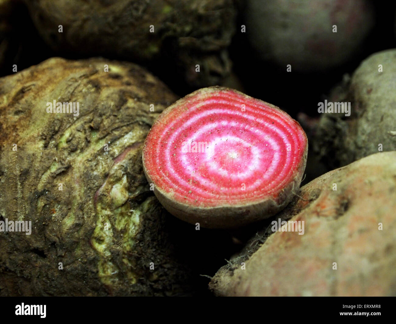 open beetroot close up - Stock Image