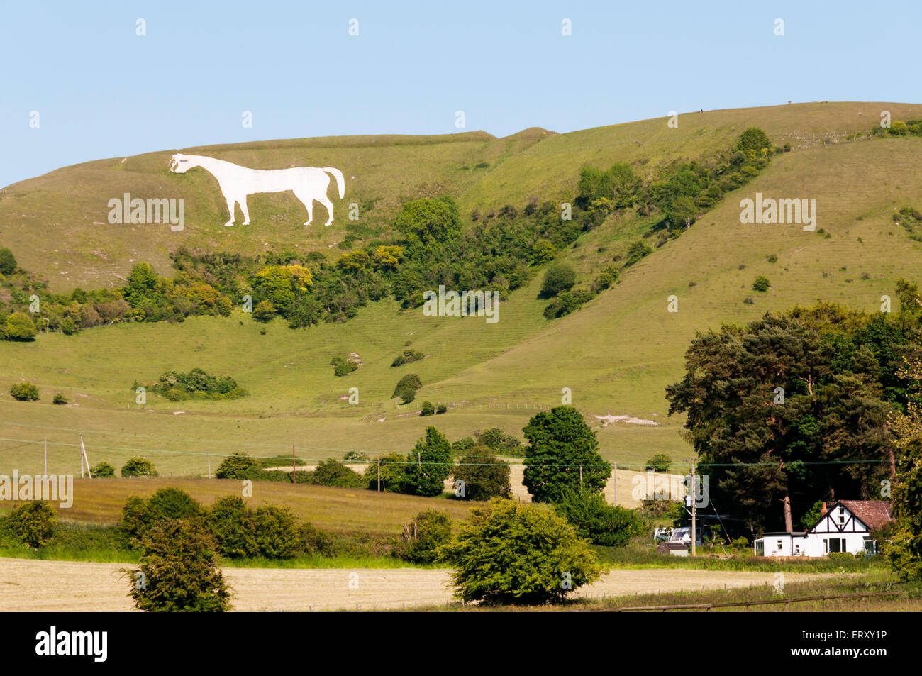 Westbury White Horse chalk figure on the escarpment of Salisbury Plain in Wiltshire. Stock Photo