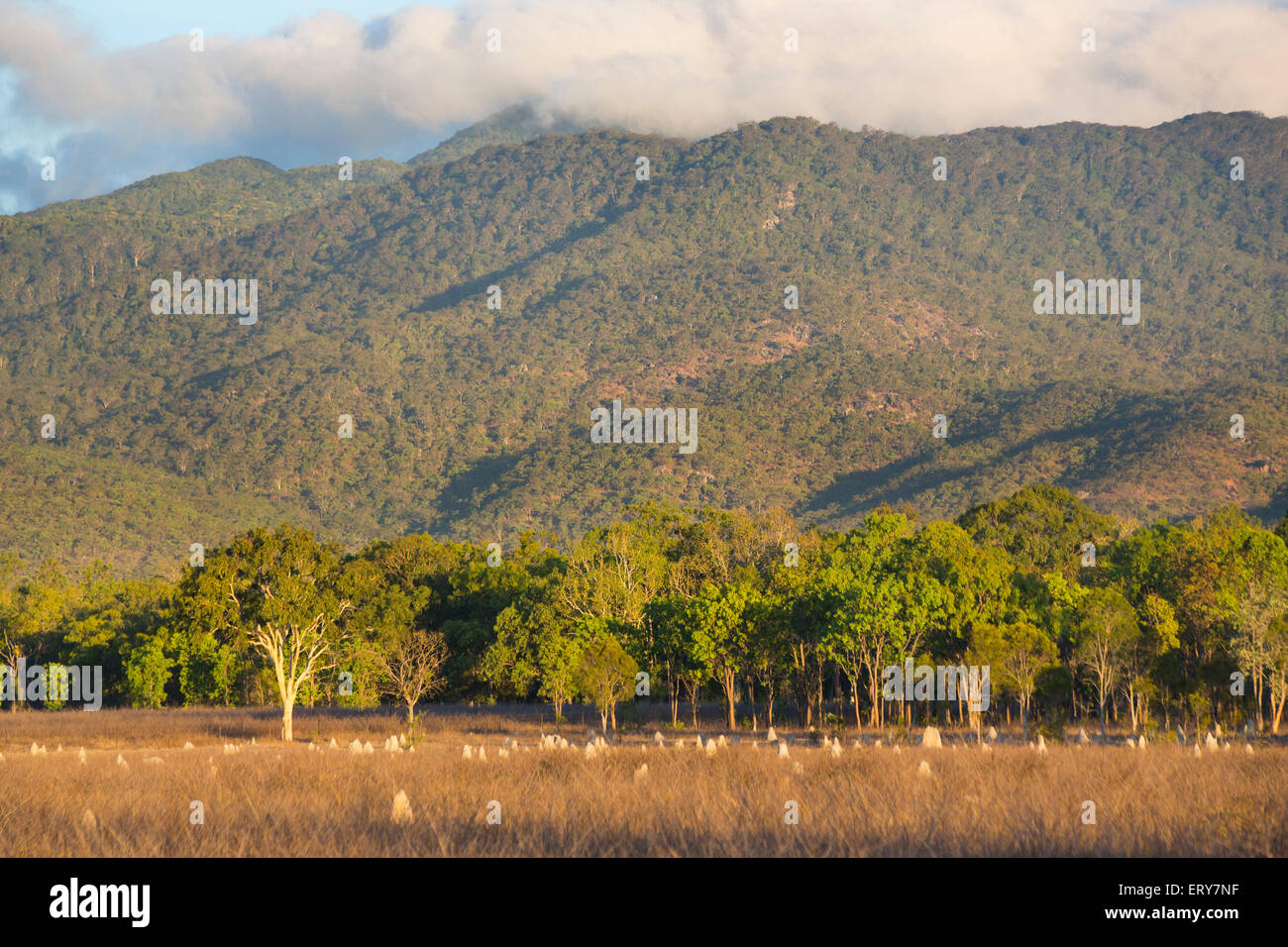 Grazing fields with the Mount Carbine tablelands in the background, Queensland, Australia - Stock Image