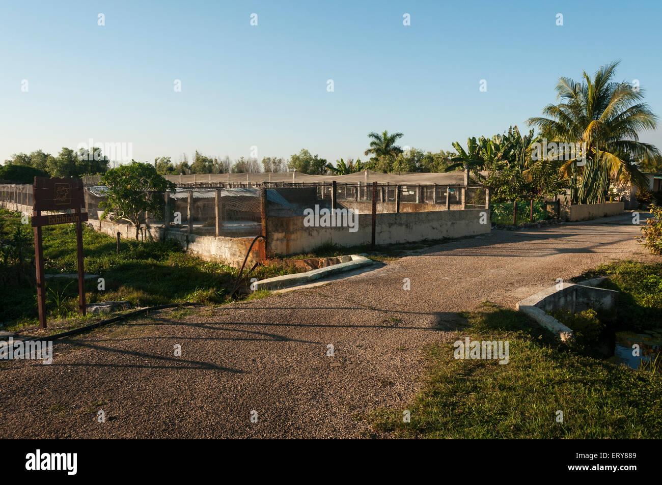 Elk224-3005 Cuba, Boca de Guama, Criadero de Crocodrilos, crocodile farm, breeding pens - Stock Image
